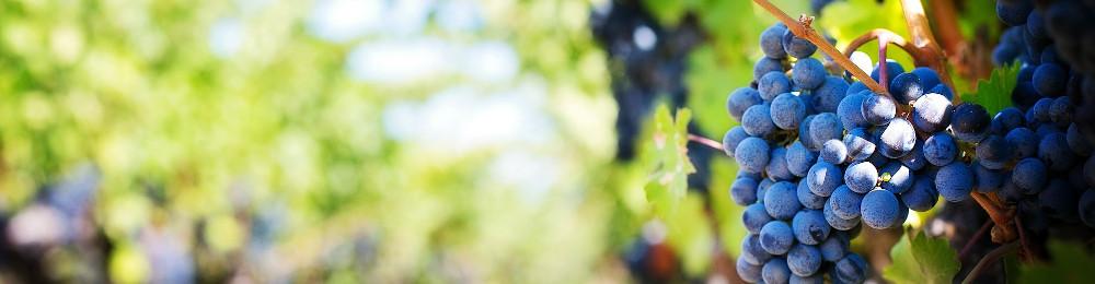 Изображение: виноград.